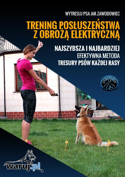 sposób jak szkolić psa obrożą elektryczną