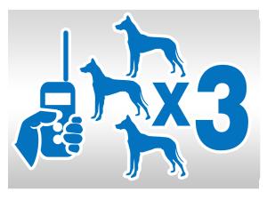 obroża treningowa na trzy psy