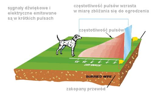 jak działa elektryczna obroża pastuch dla psa