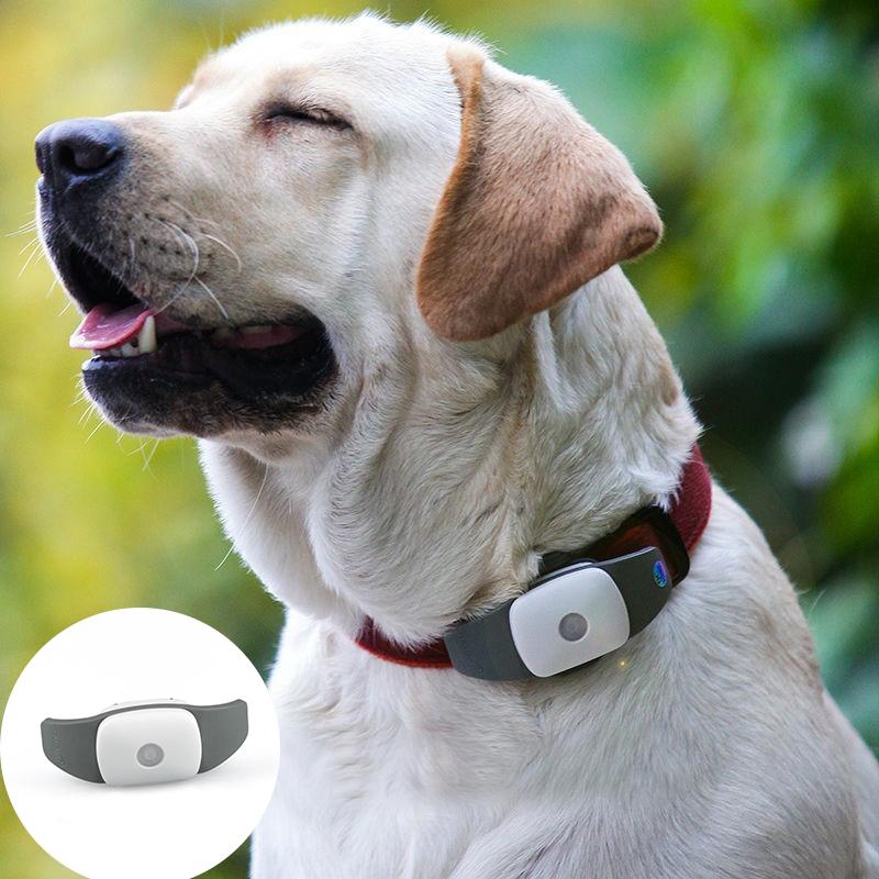 Obroża z GPS dla psa